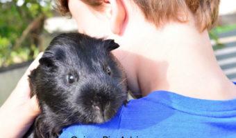 guinea pig info for kids
