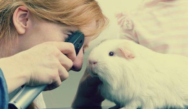 All About Pneumonia Infection in Guinea Pigs