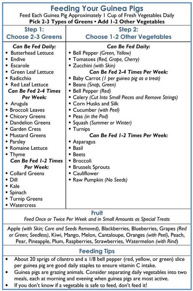 Guinea Pig Diet Chart