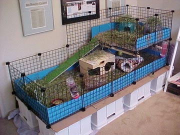 cage for 3 guinea pigs